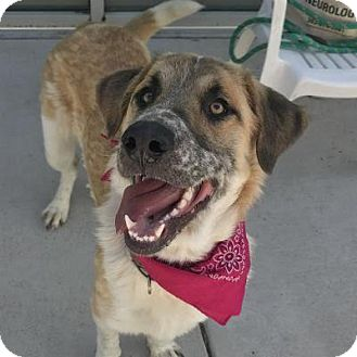 Mixed Breed (Large) Mix Dog for adoption in Denver, Colorado - Owl