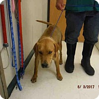 Adopt A Pet :: T-BONE - Oroville, CA