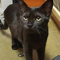 Adopt A Pet :: Aria - South Bend, IN