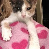 Adopt A Pet :: Dumpling - Santa Clarita, CA