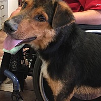Adopt A Pet :: Otis - Amarillo, TX