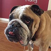Adopt A Pet :: Rudy - Odessa, FL