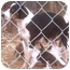 Photo 2 - Beagle/Border Collie Mix Dog for adoption in Muskogee, Oklahoma - Maria