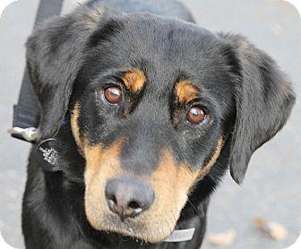 Shepherd (Unknown Type) Mix Dog for adoption in Sacramento, California - Angela!