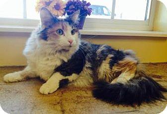 Calico Cat for adoption in Larned, Kansas - Hallie