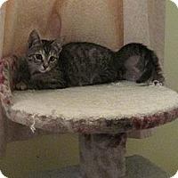 Adopt A Pet :: Lighting - Acme, PA