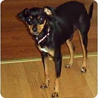 Adopt A Pet :: Dixie - Glastonbury, CT