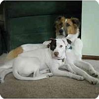 Adopt A Pet :: Jack - Albany, NY