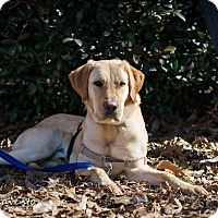 Adopt A Pet :: Bo - Cumming, GA