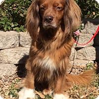 Adopt A Pet :: Riley - San Antonio, TX