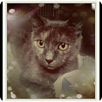 Adopt A Pet :: Lorissa - Trevose, PA