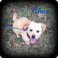 Adopt A Pet :: Chaz - Denver, NC