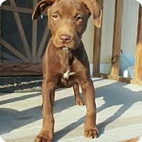 Adopt A Pet :: Skeeter - Las Cruces, NM