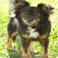 Adopt A Pet :: Birch - Boulder, CO