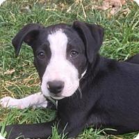 Adopt A Pet :: Cordelia - Chico, CA