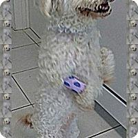 Adopt A Pet :: Charlotte - IL - Tulsa, OK