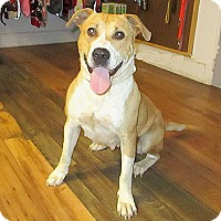Adopt A Pet :: 17-d06-042 Sarah - Fayetteville, TN