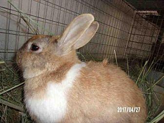 Dutch Mix for adoption in Goleta, California - SHINE