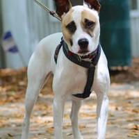 Adopt A Pet :: Pumpkin - Charleston, SC