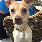 Adopt A Pet :: Minnie