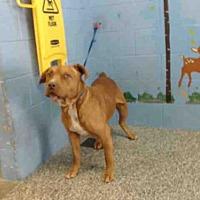 Adopt A Pet :: A506329 - San Bernardino, CA