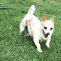 Adopt A Pet :: Tommy - Santa Clarita, CA