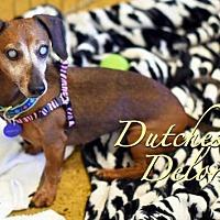 Adopt A Pet :: Dutchess Delores - San Antonio, TX