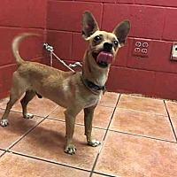 Adopt A Pet :: MATT - Downey, CA