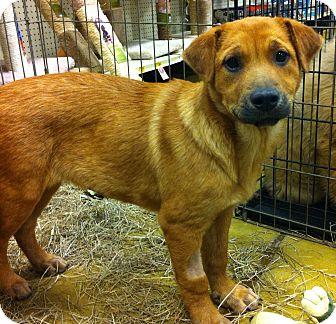 Shepherd (Unknown Type) Mix Puppy for adoption in Gainesville, Florida - Wynne
