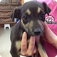 Adopt A Pet :: March - Stilwell, OK