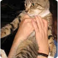 Adopt A Pet :: RJ - New York, NY