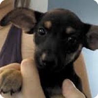 Adopt A Pet :: Bella - Washington, NC