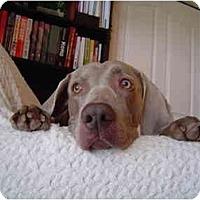 Adopt A Pet :: Harley  **ADOPTED** - Eustis, FL