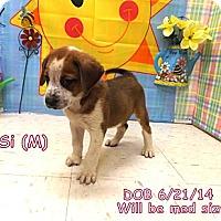 Adopt A Pet :: Si - South Jersey, NJ
