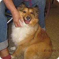 Adopt A Pet :: Maggie - apache junction, AZ