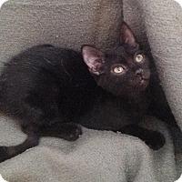 Adopt A Pet :: Roy - Colmar, PA