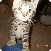 Adopt A Pet :: Tyne - Wellington, OH