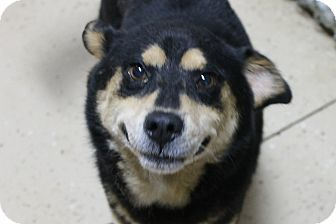 Shepherd (Unknown Type) Mix Dog for adoption in Mt Sterling, Kentucky - Bella