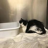 Adopt A Pet :: Page - Santa Paula, CA