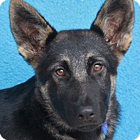 Adopt A Pet :: Evie von Evessen - Los Angeles, CA