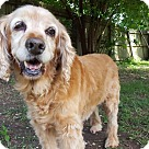 Adopt A Pet :: Saege