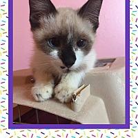 Adopt A Pet :: Marilyn Monroe - Scottsdale, AZ
