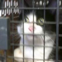 Adopt A Pet :: Gus - Opelousas, LA