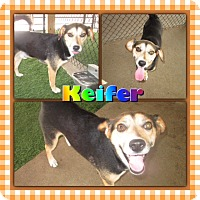 Adopt A Pet :: Keifer - Lexington, KY