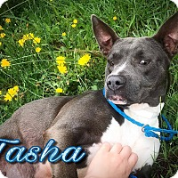 Adopt A Pet :: Tasha - Covington, TN