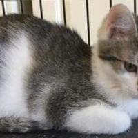 Adopt A Pet :: Roy - Kokomo, IN