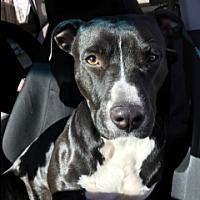Adopt A Pet :: Karma - Elyria, OH