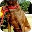 Photo 2 - Labrador Retriever Mix Dog for adoption in Pawling, New York - RILEY