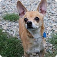 Adopt A Pet :: Mighty - Tinton Falls, NJ