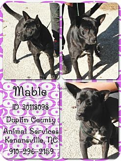 German Shepherd Dog/German Shepherd Dog Mix Dog for adoption in Kenansville, North Carolina - MABLE